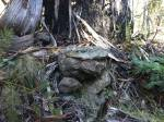 rock formation that looks like a resting quizzical wombat